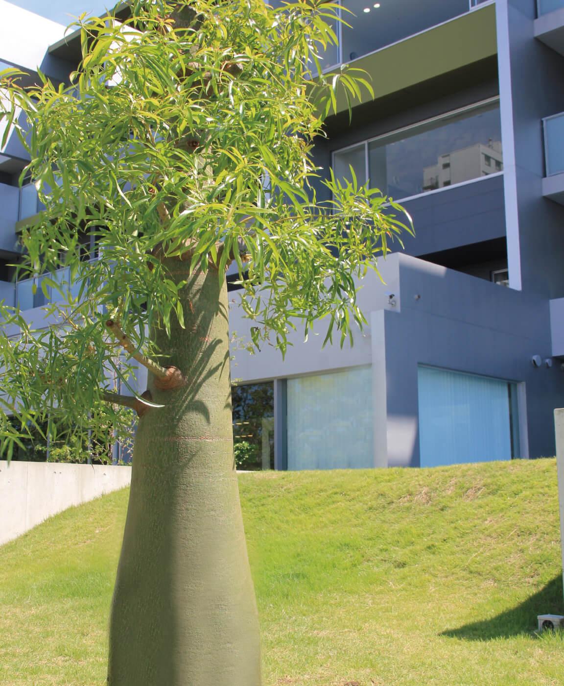 プラントハンターが監修した世界の珍しい植物の楽園フィールガーデン
